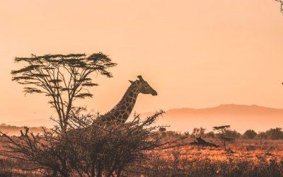 10 consejos para viajar por Kenia de forma responsable